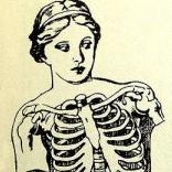ribcage